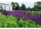 Londra – Londra'da Parklar II - Kew Gardens