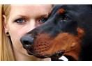 Saldırganlaştırılan Köpekler!..
