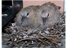 Anne, Kuşlar Geri Döner mi?