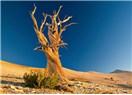 Büyükler İçin Öyküler 'Kurumuş Ağaçlar'