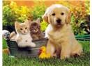 Kedilere Daha Töleranslı Davranan Türk Toplumu, Köpeklere Eziyet Edenlere Neden Seyirci Kalıyor?
