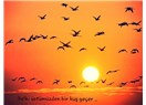 Gitmenin Ne Demek Olduğunu Bilir mi Kuşlar?