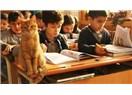 Bir Kedi...Adı: Tombi