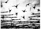 """""""Birisi Barışı Başlatmalı"""""""