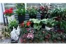 Kış Mevsiminde Evimizdeki Bitkilere  Nasıl Bakmalıyız?