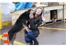 Hayvanseverlerin Sevdiği Hayvanlar Eti Yenmeyen Hayvanlar