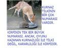 Türkler ve Ruslar İlişkilerinde Kirpi Siyaseti mi Yürütmektedir (1)