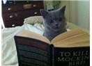 Kedilerden Öğrendiğim 18 Hayat Dersi (alıntı)
