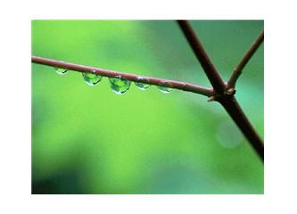 Yağmur hikayeleri...
