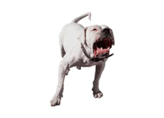 Havlayan köpek ısırır mı?