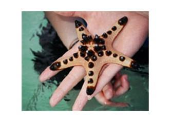 Acil durum!!! İşte bir denizyıldızı!!!