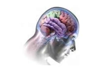 Beynimiz nasıl çalışıyor?