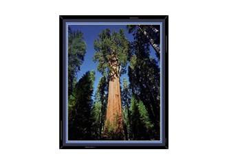 Ağaçların sırrı