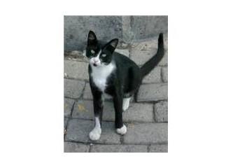 Sokak hayvanı portreleri: Yılbaşı kedisi
