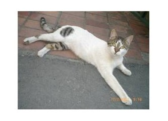 Sokak hayvanı portreleri: Ofisin yan komşu kedileri
