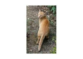 Sokak hayvanı portreleri: Ananem sarı kedilere bayılır