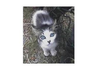 Sokak hayvanı portreleri: Dünyanın en güzel gözlü kedisi