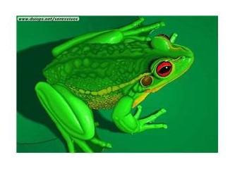 Kurbağa hikayesi