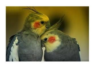 Aşk, aşk olduğunu söylemeli insana