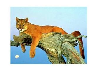 Puma (Balık Burcu ) 2. bölüm