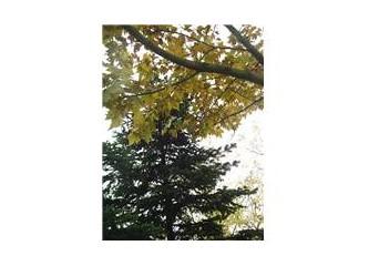 2 B ormanlarımızı sattırmayız, açık hava konseri 25 Kasım'da Taksim'de