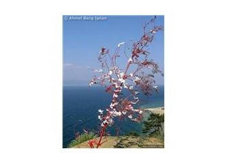 MB Dilek ağacı (dilek dilemek ücretsizdir)