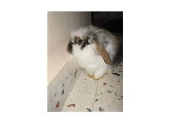 Tavşanlar alemi