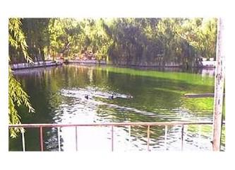 Yeşil kurbağalar öter göllerde...