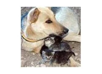 Kime hayvan denir!...
