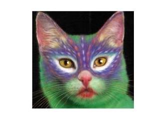 Kedi boyama sanatı