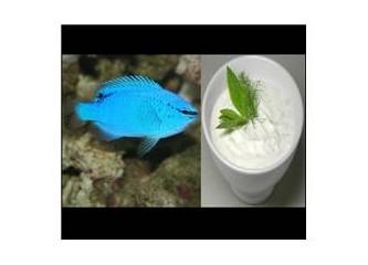 Taze balıkla yoğurt yiyin