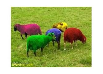 Bir mor koyun klasiği