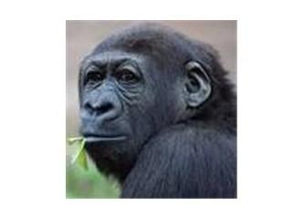 Bir yüzü Allah'a, bir yüzü Darwin'e..