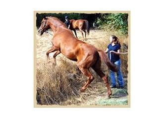 Atlar ölür, elmalar çürür