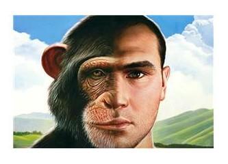 Maymun savaşları ve siyasallaşan maymunlar