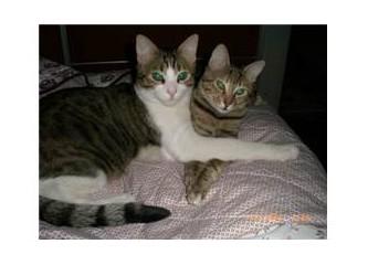 Kedilerime yeni sıcak bir yuva arıyorum...