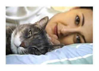 Neden kedi severiz?