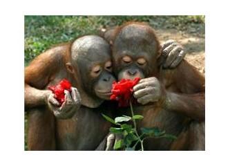 Güllerin dikeni mi vardır, yoksa dikenli dalların mı gülleri mi?