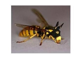 Dilimizi sokan arılar
