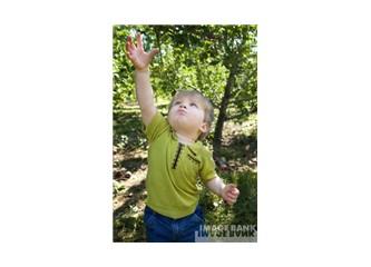 Çocuk eğitiminde bir analoji:  İnsan yetiştirmek ve ağaç yetiştirmek