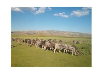 Türkiye'de ve dünyada tarım, hayvancılık