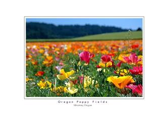 Çiçek bahçesi yüreğim