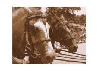 Dünyaya at gözlüğü ile bakmak
