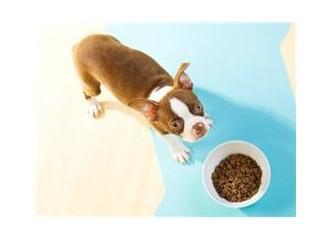Doğru ve doğal kedi-köpek maması nasıl seçilir?