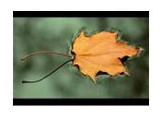 Hazan ve hüzün mevsimi sonbahar