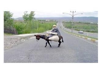 Fakirin atı katır, zenginin katırı at