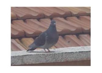 Güvercine günaydın, bahara merhaba