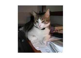 İpucu 1 - Kedinizin sağlıklı olduğunu nasıl anlarsınız?