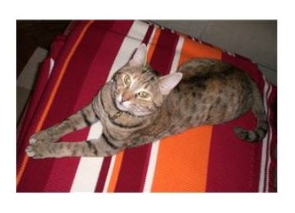 İpucu 2 - Kedinizin hastalıklı olduğunu nasıl anlarsınız?