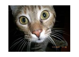 İpucu 3 – Kedilerde sık görülen hastalık belirtileri